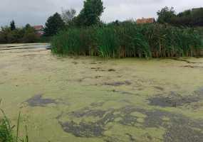 Жители Нижнекамского района спасают реку, которая превращается в болото