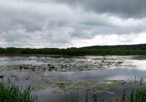 Прогноз погоды на 26 августа в Татарстане: ожидается сильные ветер и похолодание