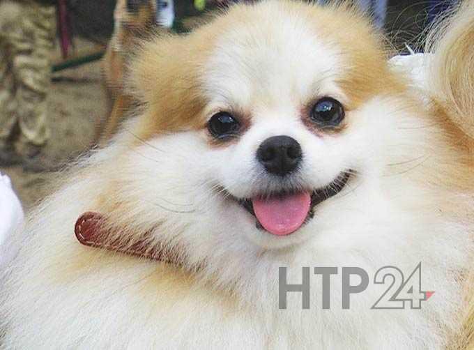 В Нижнекамске открылась вторая площадка для выгула и дрессировки собак