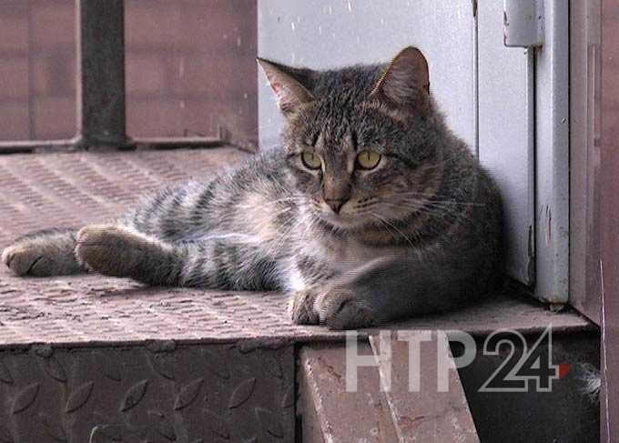 В Нижнекамске разработана концепция программы помощи бездомным животным