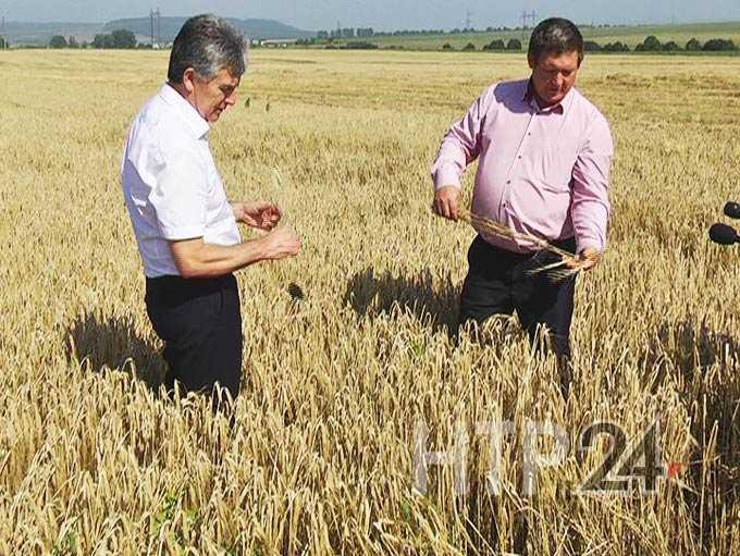 В Нижнекамском районе завершена уборка зерновых культур
