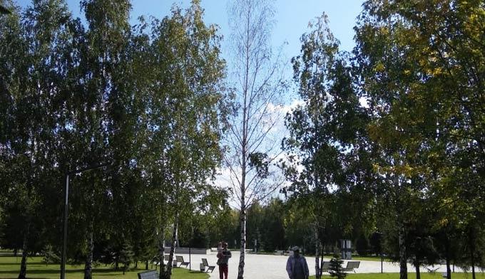 Сухое дерево в сквере Лемаева