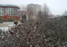 Синоптики назвали регионы России, где в ближайшие дни будут заморозки до -3 и дождь со снегом
