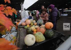 В Татарстане традиционные осенние сельхозярмарки начнут работу с 14 сентября