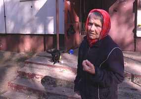 Пенсионерка из Нижнекамска переживает за судьбу своих усатых подопечных