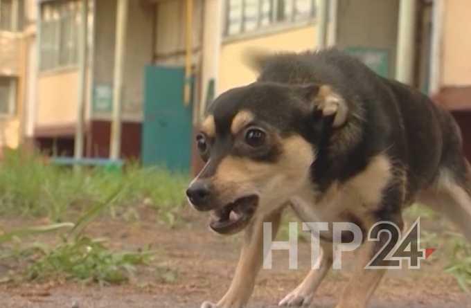 Что делать, если на вас напала собака - советы МЧС