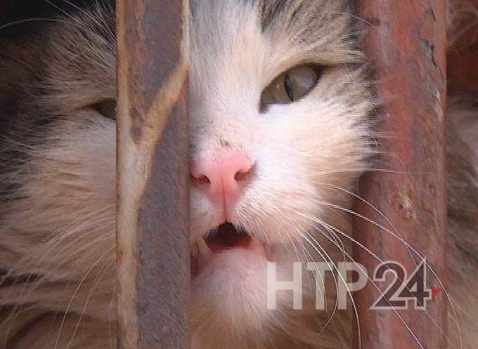 Нижнекамцы предполагают, что дворовых кошек замуровали в подвале