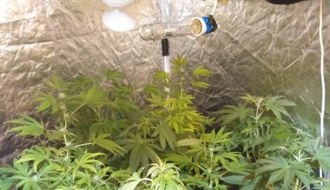 Ук рф марихуана выращивание кустов музыкант курит марихуану