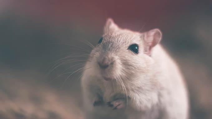 Бабушка умерла, пытаясь выгнать из своего дома мышь