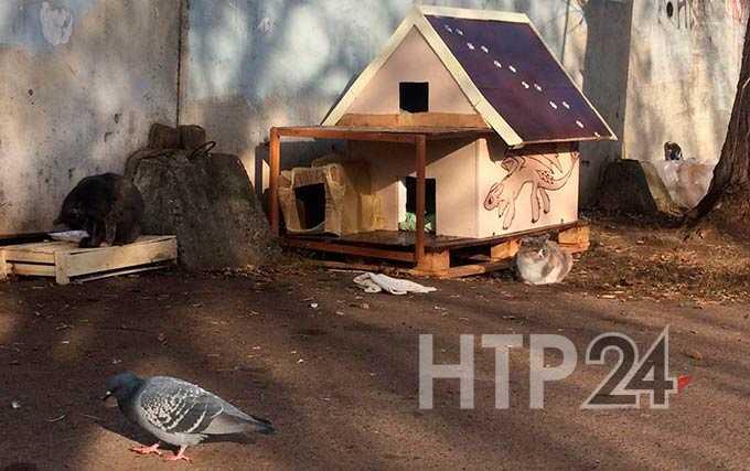 В Нижнекамске зооактивисты нашли способ помочь бездомным кошкам пережить зиму