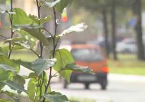 В Нижнекамске 10 градусов тепла, ожидается дождливая погода с ветром