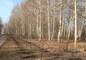 В ближайшие часы на Татарстан обрушится шквалистый ветер