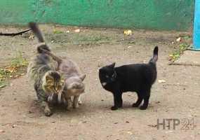 В Татарстане бездомных животных убивали с особой жестокостью