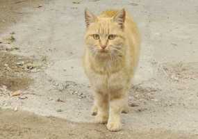 Кошка, задержанная с партией наркотиков в одной из исправительных колоний, отправлена в приют