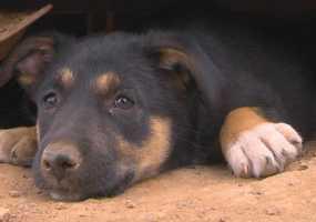 В Нижнекамске заработал сайт знакомств бездомных животных с их будущими хозяевами