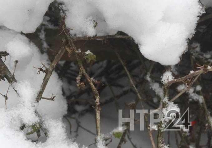 Рядом со скелетом пропавшей пенсионерки нашли набитый деньгами рюкзак