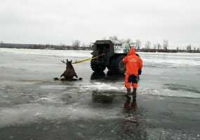 Появились кадры спасательной операции на льду Камы, где лось провалился в полынью