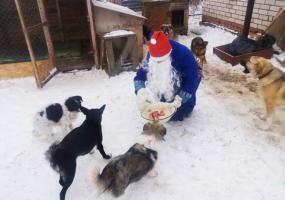 В Нижнекамске Дед Мороз принес новогодние подарки бездомным животным