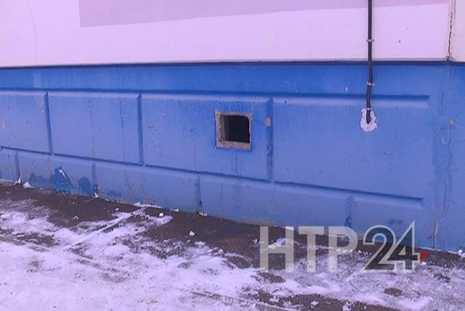 В Нижнекамске кошки смогут спасаться от мороза в подвалах жилых домов