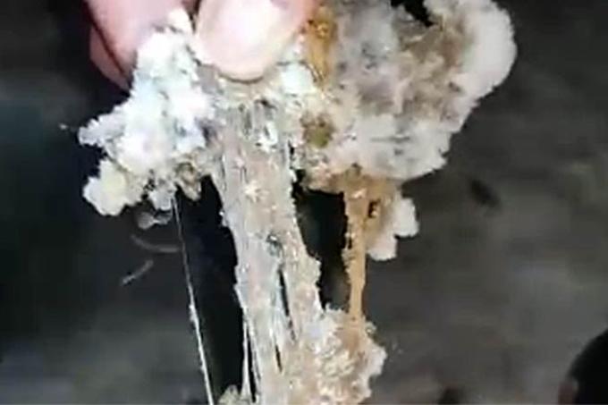 НТР 24 получил результаты проб воды в Каме, где рыбаки нашли странную субстанцию