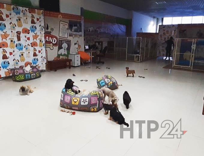 В Нижнекамске из-за возмущения горожан закрыли выставку собак