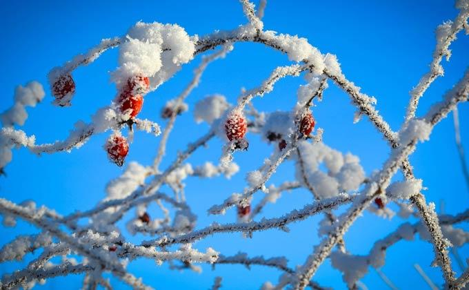 В Татарстане ожидается туман и 25 градусов мороза