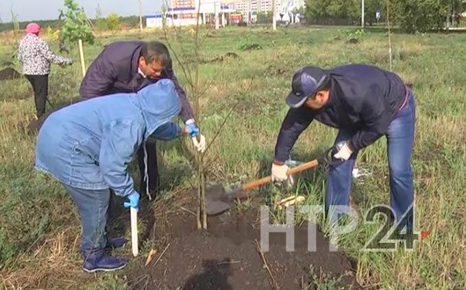 Этой весной во всех районах и городах Татарстана посадят саженцы рябины, липы и сосны