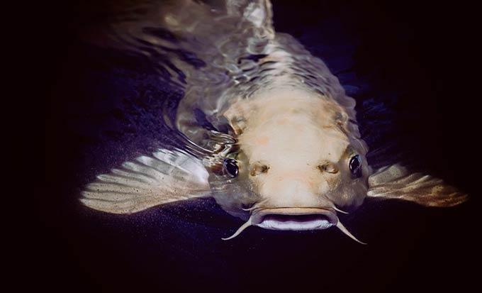 Эксперты назвали три самые опасные сорта рыбы
