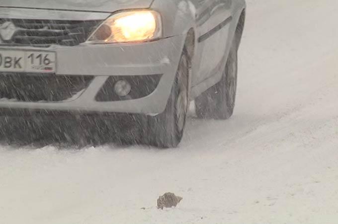 В Татарстане ожидается метель с мокрым снегом, заносами и сильным ветром
