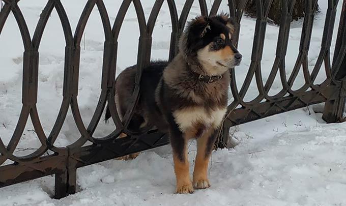 В Татарстане спасатели помогли застрявшей в заборе собаке