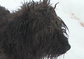 Нижнекамские зоозащитники обеспокоены судьбой пса Лаврентия