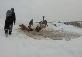 Табун лошадей провалился под лёд, их спасение попало на видео