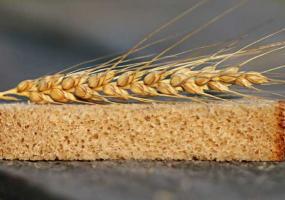 В Татарстане вывели новый сорт пшеницы «100 лет ТАССР»