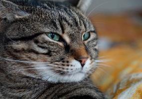 Запертую в подвале на пр.Мира в Нижнекамске кошку спасли