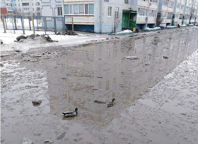 В Альметьевске в городской луже завелись утки