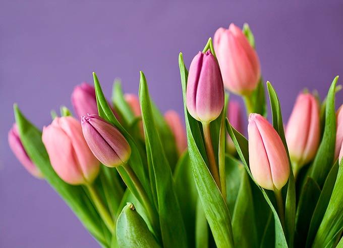 Как выбрать цветы на 8 марта, рассказали эксперты