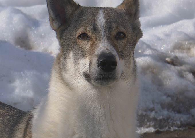 Свора агрессивных бродячих собак разгуливает по дворам Нижнекамска - очевидцы