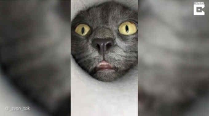 В Интернете набирает популярность ролик с любопытным котом