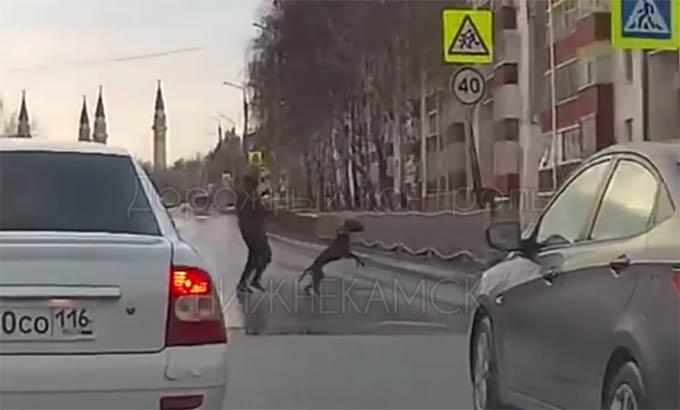 Переходящая дорогу в Нижнекамске собака рассмешила пользователей Сети