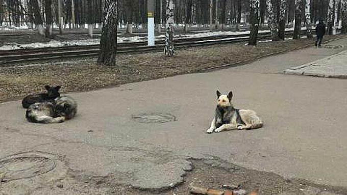 На рынке в Нижнекамске разгуливает свора собак
