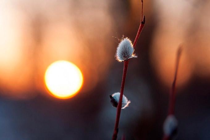 Синоптики рассказали, когда наступит настоящая весна