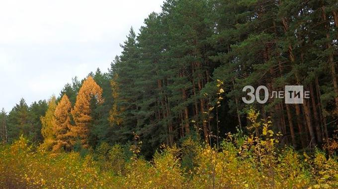 В 2020 году на восстановление лесов Татарстана выделят почти 200 миллионов рублей