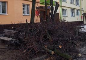 Нижнекамец возмущён вырубкой деревьев на улице Вокзальной