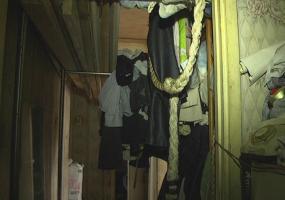 Из нижнекамской квартиры на пр.Шинников по всему дому разбегаются тараканы