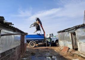 В Нижнекамском районе ветслужба бесплатно утилизирует павших домашних животных