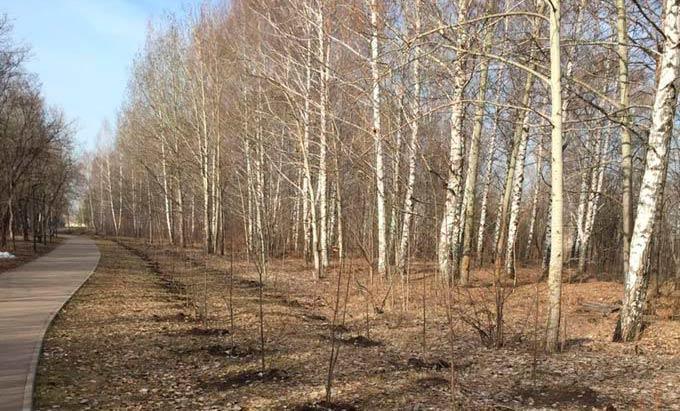 В четверг в Нижнекамске ожидается усиление ветра до 18 м/с