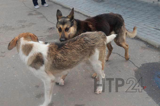 В Нижнекамске не смогли найти подрядчика для отлова бродячих собак