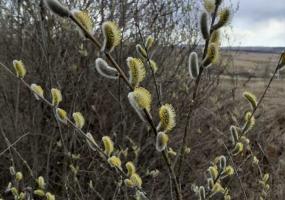 К середине недели в Татарстан вновь придёт тепло