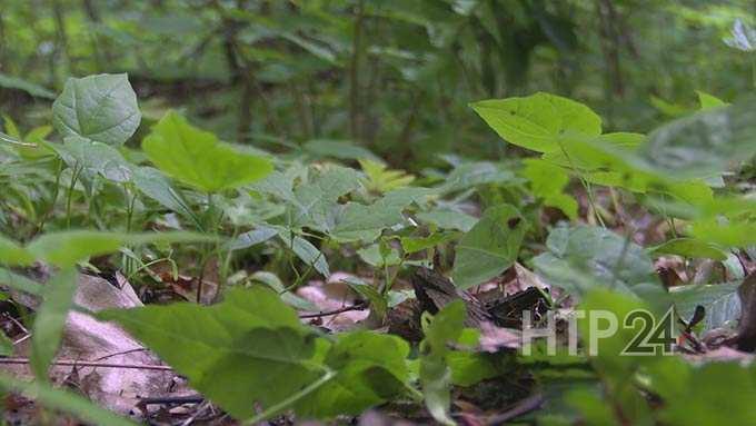 Специалисты рассказали, где в Нижнекамске можно гулять, не опасаясь нападения клещей