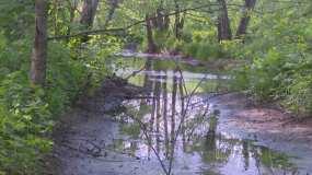 Экологи отобрали пробы воды в реке Уратьминка, куда сливают нечистоты